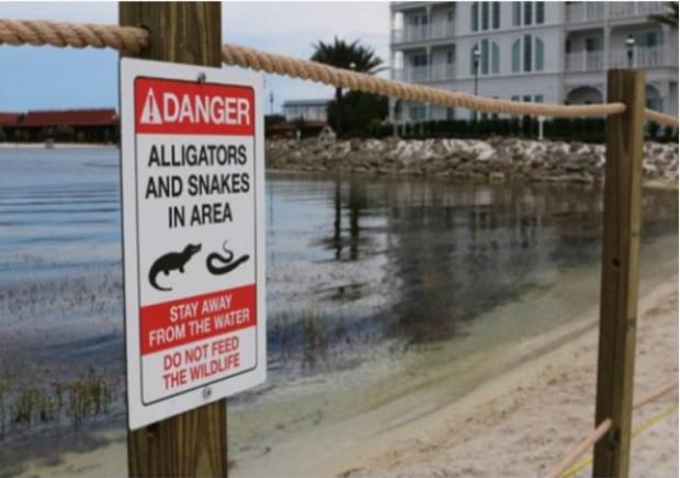 Disney Alligator Kills Child Gator Deemed Quot Harmless Quot