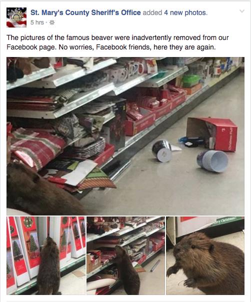 Maryland Christmas Beaver